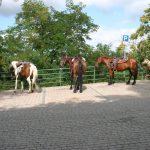 IV raduno Salvia Ranch